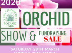 Annual Orchid Show