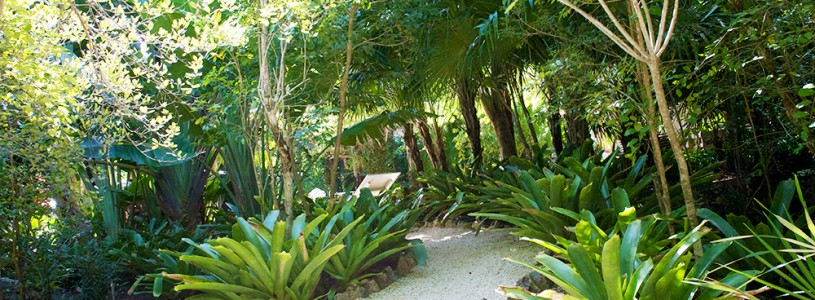 Eco Chic Cayman's Recent Feature On The Park